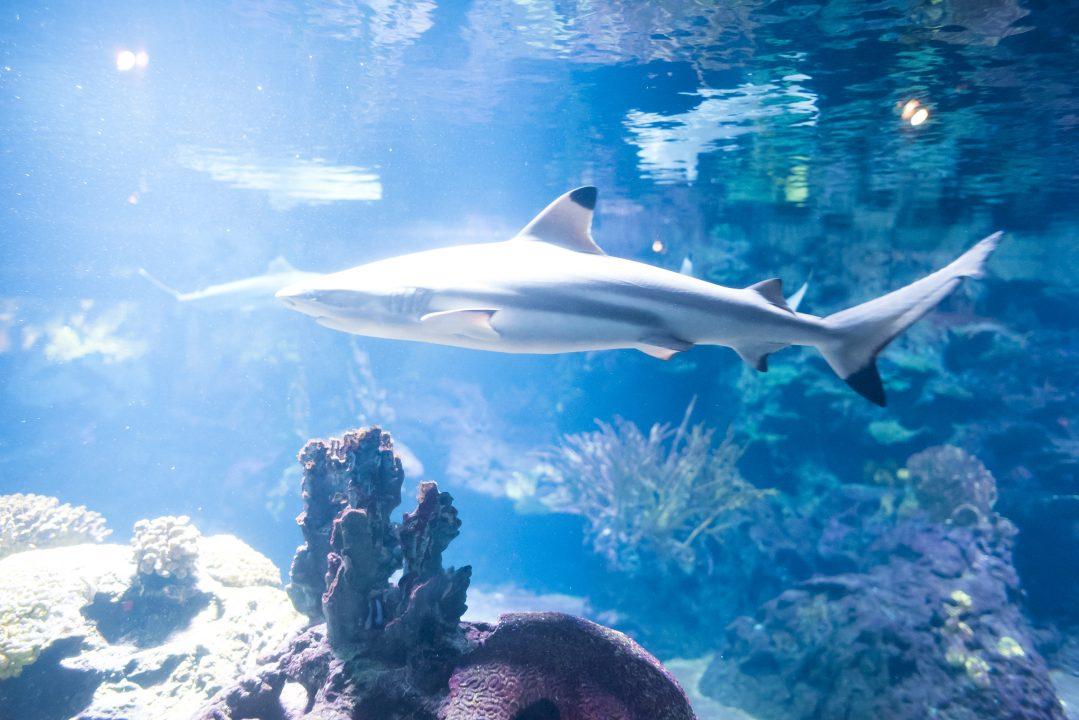 Schwarmschwärmerei – Die HUG im Aquarium Berlin